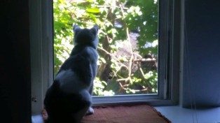 tommy window