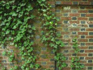 brick vines